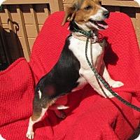 Adopt A Pet :: Little Kasey - Oakland, AR