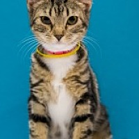 Adopt A Pet :: Freeda - Chandler, AZ