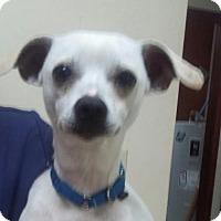 Adopt A Pet :: Henry - Winder, GA
