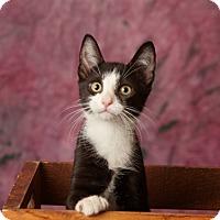 Adopt A Pet :: Daggett - Harrisonburg, VA