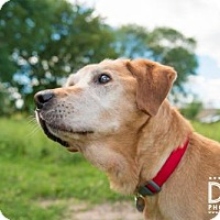 Adopt A Pet :: Kipley ** Pending adoption! ** - St. Cloud, MN