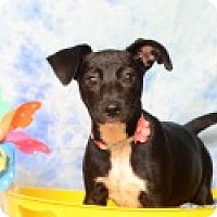 Adopt A Pet :: Darby - Pittsboro, NC