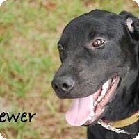 Adopt A Pet :: Brewer - Minneola, FL