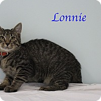 Adopt A Pet :: Lonnie - Bradenton, FL