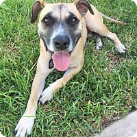 Adopt A Pet :: Sampson - Houston, TX