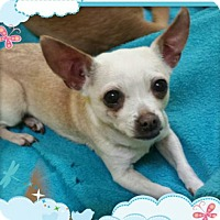 Adopt A Pet :: Miata - Akron, OH