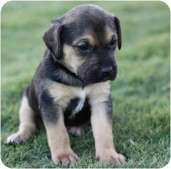 Dog Austin Adoption