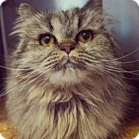 Adopt A Pet :: Ursula - Davis, CA