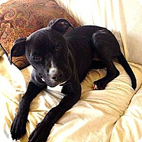 Adopt A Pet :: Roxanne - Silsbee, TX