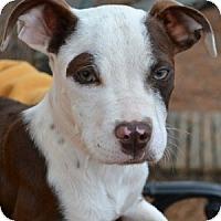 Adopt A Pet :: Magellan - Athens, GA