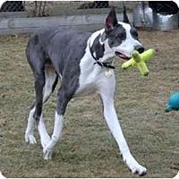 Adopt A Pet :: BOONE - Pearl River, NY