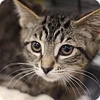 Adopt A Pet :: Tulip - Sacramento, CA