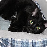 Adopt A Pet :: Rex - Secaucus, NJ