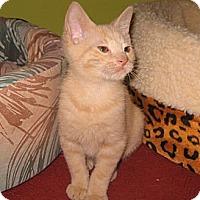Adopt A Pet :: Khaki - Colmar, PA