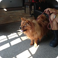 Adopt A Pet :: SOOKI - Dix Hills, NY