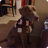Adopt A Pet :: BudBud - Philadelphia, PA