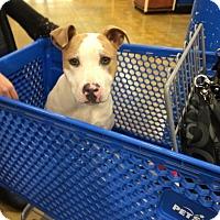 Adopt A Pet :: Kieva - Sacramento, CA