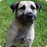 Adopt A Pet :: Herbie - Miami, FL