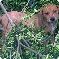 Adopt A Pet :: Claire - North Brunswick, NJ