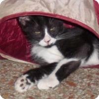 Adopt A Pet :: Soxx - Seminole, FL