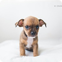 Adopt A Pet :: Jepson - Marietta, GA