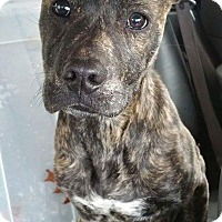 Adopt A Pet :: Romey - mooresville, IN