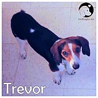 Adopt A Pet :: Trevor - Pittsburgh, PA