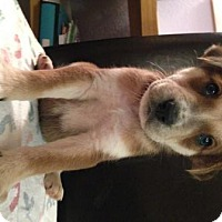 Adopt A Pet :: Flint - North Richland Hills, TX