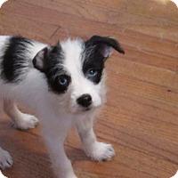 Adopt A Pet :: Polly - Broken Arrow, OK