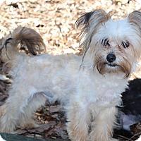 Adopt A Pet :: Otis - Atlanta, GA