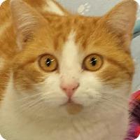 Adopt A Pet :: Stewart - Colfax, IA