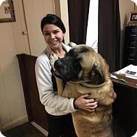 Adopt A Pet :: Dozer - Chambersburg, PA
