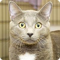 Adopt A Pet :: Papo - Fall River, MA