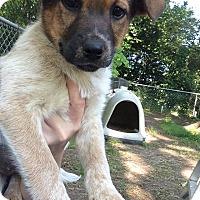 Adopt A Pet :: Sadie - Barnegat, NJ