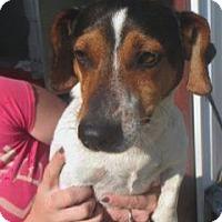 Adopt A Pet :: Sarge - Westwood, NJ