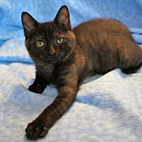 Adopt A Pet :: Evie - Greensboro, NC