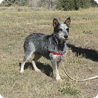 Adopt A Pet :: Micha - Ridgway, CO