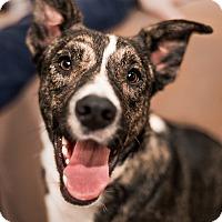 Adopt A Pet :: BLINKIN - Corning, CA