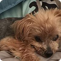 Adopt A Pet :: Rocky G - Tallahassee, FL