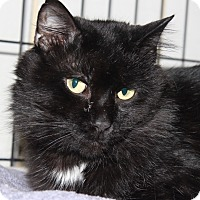 Adopt A Pet :: Nikos - Middletown, CT