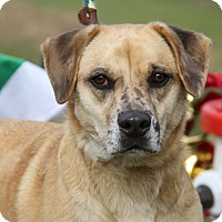 Adopt A Pet :: Teddy (Neutered) - Marietta, OH