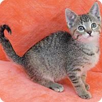 Adopt A Pet :: Taffy - Elkhorn, WI