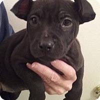 Adopt A Pet :: 11Npups - Palmdale, CA