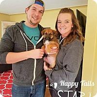 Adopt A Pet :: zPP16- Vincent -ADOPTED - Northville, MI