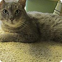 Adopt A Pet :: Olivia - Acme, PA