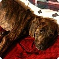 Adopt A Pet :: Raven - Sacramento, CA