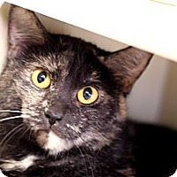 Adopt A Pet :: Blush June - Chicago, IL