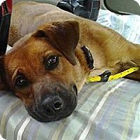 Adopt A Pet :: Tater - Pocahontas, AR