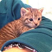 Adopt A Pet :: Madison - Island Park, NY