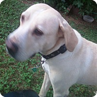 Adopt A Pet :: Janie - Hagerstown, MD